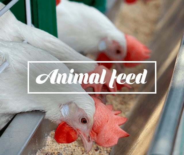 Animal Nutricion